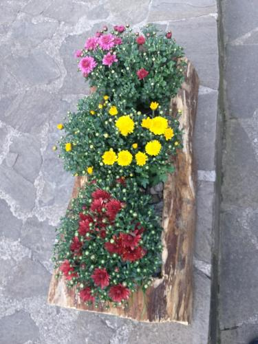 Pensiunea Flora, Cartisoara
