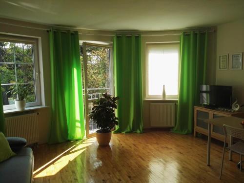 . Zielone Studio
