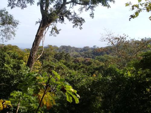 Bosque De José
