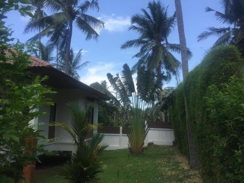 Blue Coconut House Blue Coconut House