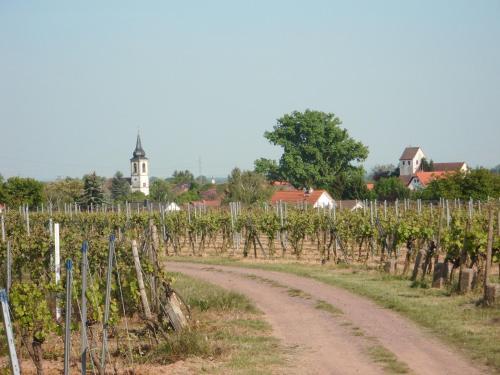 . Ferienwohnung Südpfalz