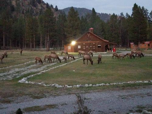 The Wild Game Inn - Darby, MT 59829