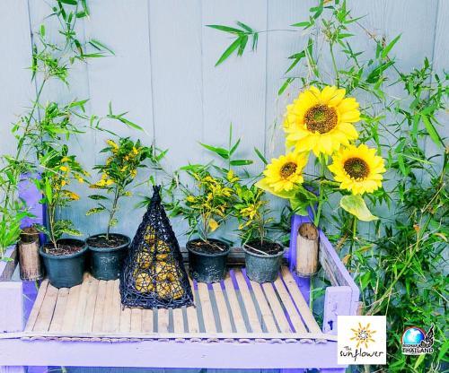 The Sunflower Lipe The Sunflower Lipe