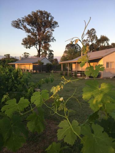 . Emma's Cottage Vineyard