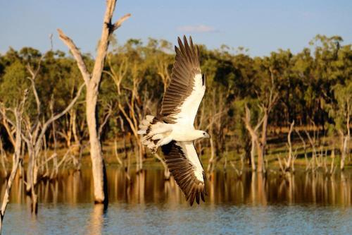 Crystalbrook Road, Almaden, Queensland, QLD 4871, Australia.