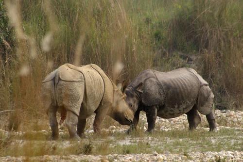. Bardia Wildlife Resort