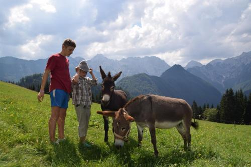 "Farm Stay ""Alpine Dreams"""