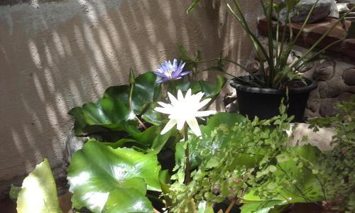 Lotus House Pai Lotus House Pai