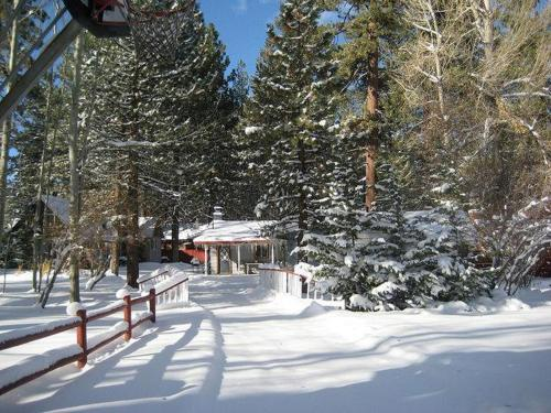 Moose - Big Bear Lake, CA 92333