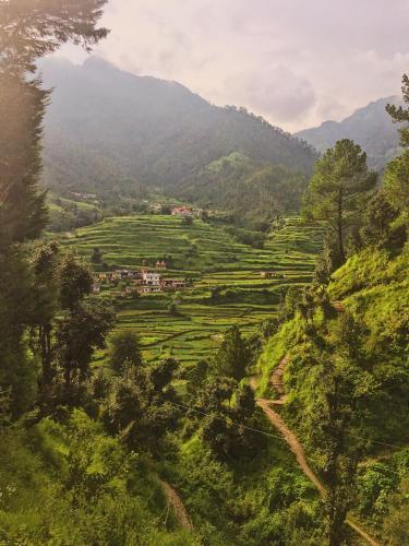 Greenery of Ranikhet