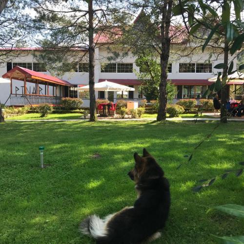 Artvin pınar kır evi rezervasyon