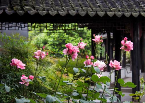 Tongli Lake View Hotel photo 72