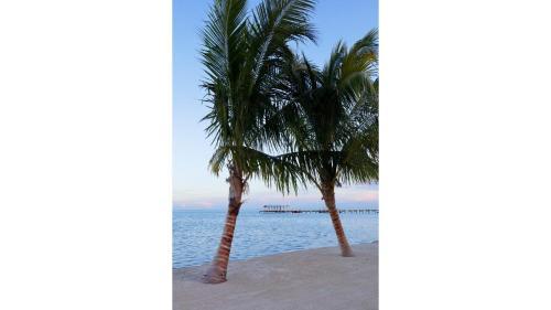 81801 Overseas Hwy, Islamorada, FL 33036, United States.