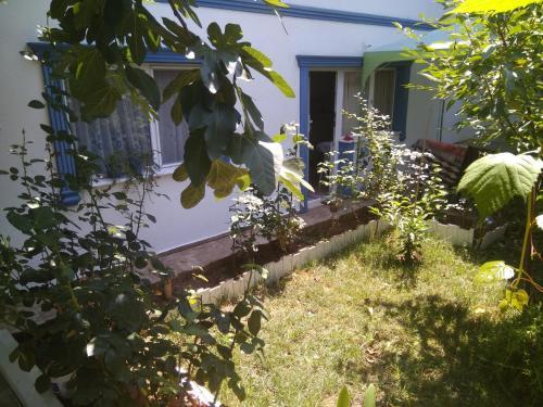 Agva Ağva Ayşe Hanım Guesthouse 3 rezervasyon