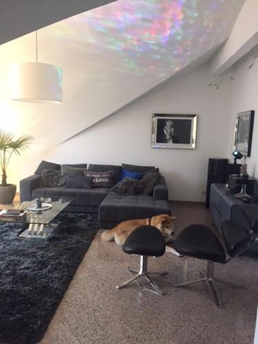 Apartment Düsseldorf zentrale Lage photo 19