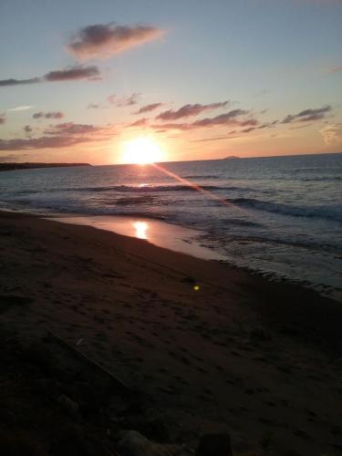 . Ocean Dreams