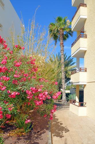 Фото отеля Apartamentos Los Juncos I