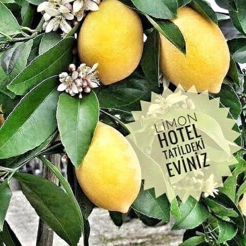 Limon Hotel, 48300 Fethiye