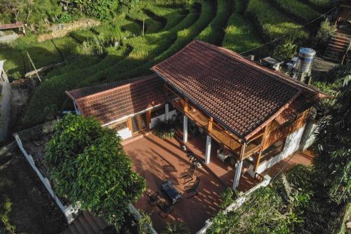 Luckydaisy Buffalo House