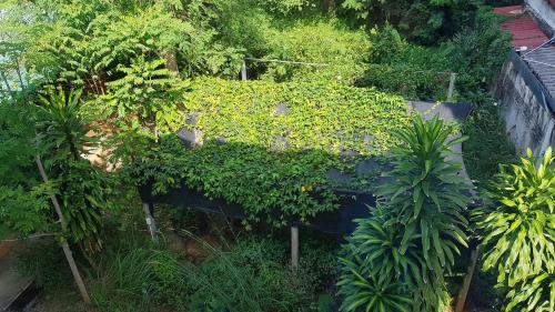 Elephants End Guesthouse Krabi