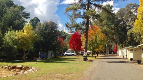 Фото отеля Beechworth Lake Sambell Caravan Park