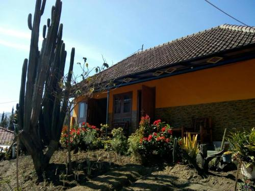 Homestay Bu Nanik, Probolinggo