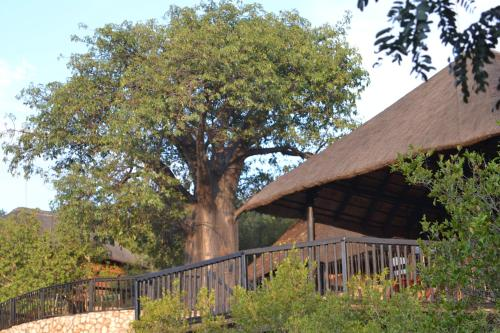Фото отеля Adansonia Eco Lodge