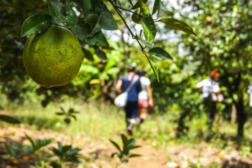 Finca Agroecologica Happy Fruit, Arenillas