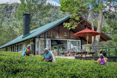 . Madulkelle Tea and Eco Lodge