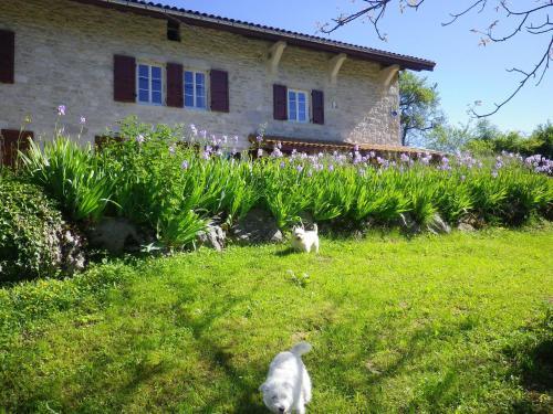 Chambre d'hôtes La Haie Fleurie - Accommodation - Chevillard