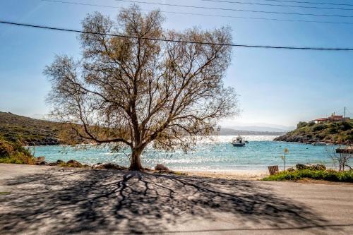 Foto - Myrtia Beach House