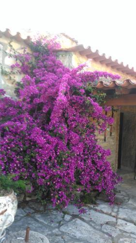 Casa de Chanca, Pension in Penela bei Pousafoles