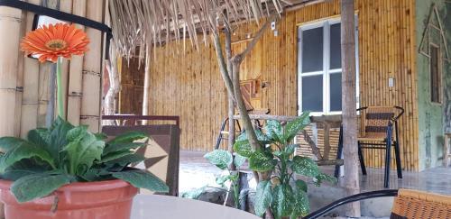 Ninh binh bungalow hostel, Gia Viễn