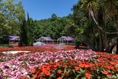 Photo - Unique Garden