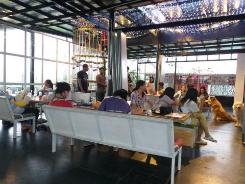 Cat cafe & homestay, Vũng Tàu