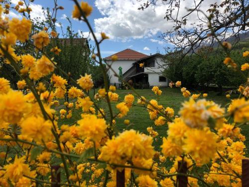Kitka Hostel - Vratnica - Photo 8 of 46