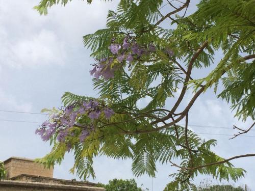 Jacaranda - Photo 3 of 27