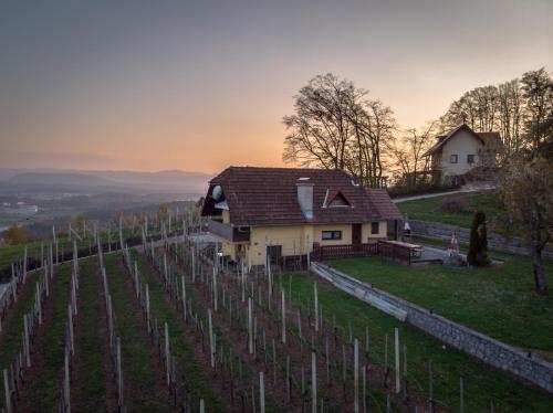 . Vineyard cottage Hočevar
