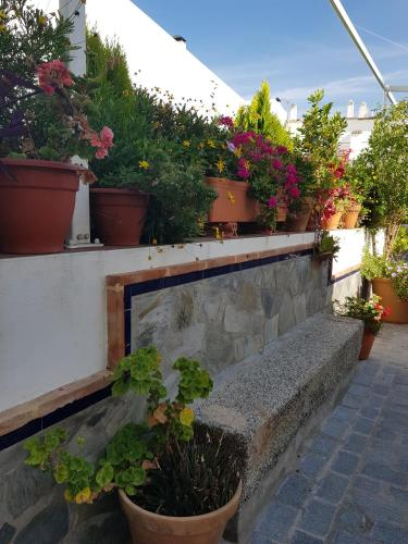 Hotel Entreolivos