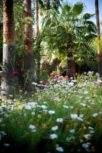 Palmeraie Marrakech, Marrakech, 40000, Morocco.
