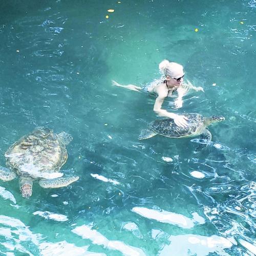Baraka Aquarium Bungalows
