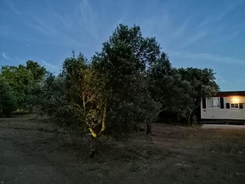 The Farm Tiny House - Tiny Casa 룸 사진