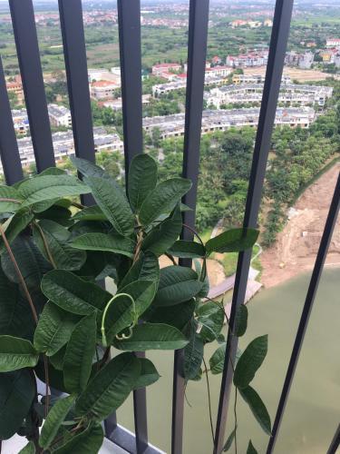 Ecogreen Apartment - Ecopark, Văn Giang