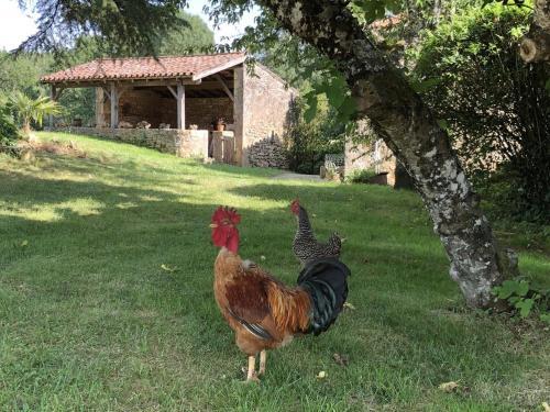 Le Gîte de Lescarcelles proche du château de Bonaguil - Location saisonnière - Cuzorn
