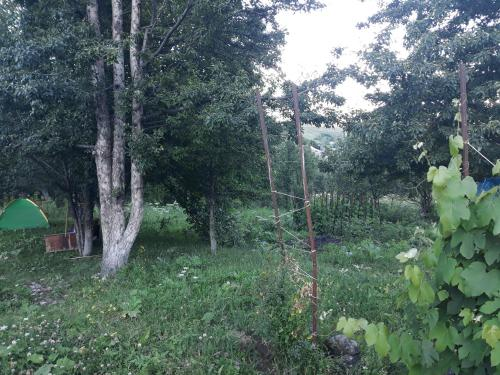 Aznvadzor Eco Camp - Photo 3 of 8