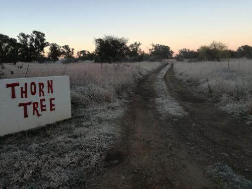 Thorn Tree Bloemfontein