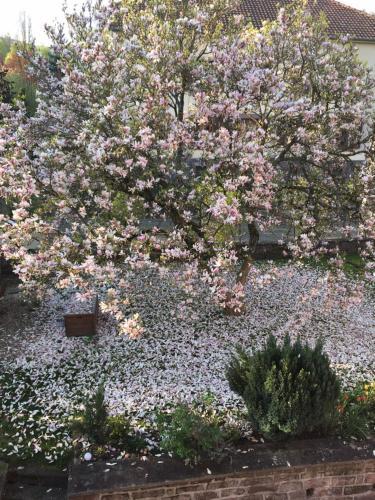chambres d'hotes Le Magnolia - Accommodation - Sainte-Croix-aux-Mines