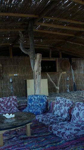 תמונות לחדר Reef Beach