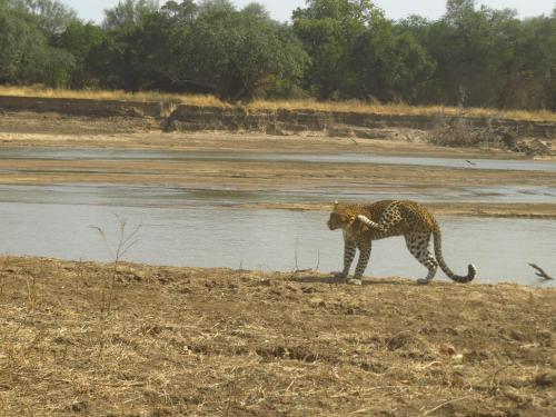 Zikomo Safari, Mpika