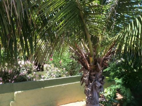 The Green House at Baby Beach Aruba - Ceru Colorado